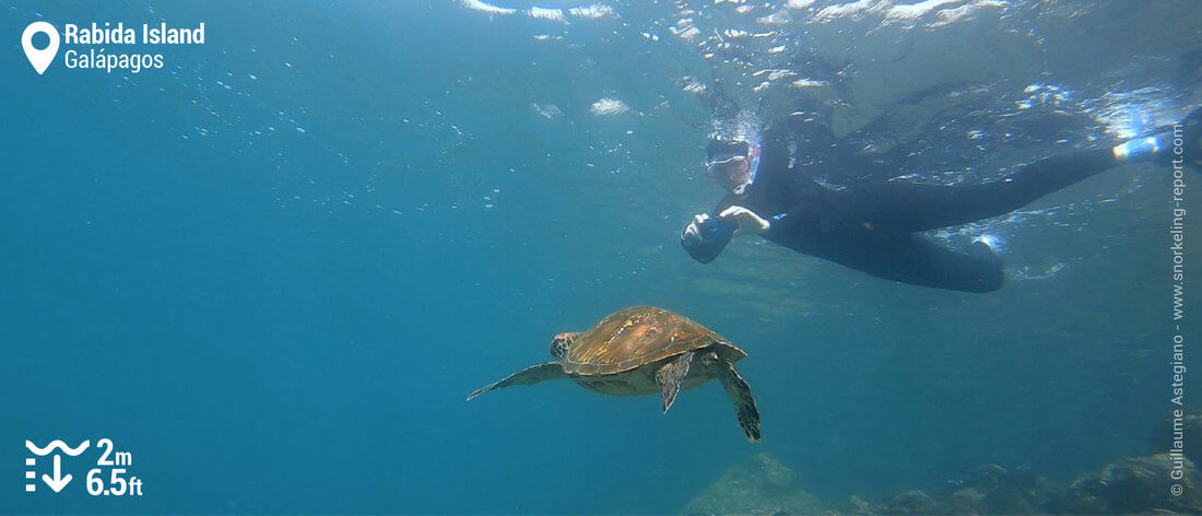 Snorkeling with sea turtle in Rabida Island, Galapagos