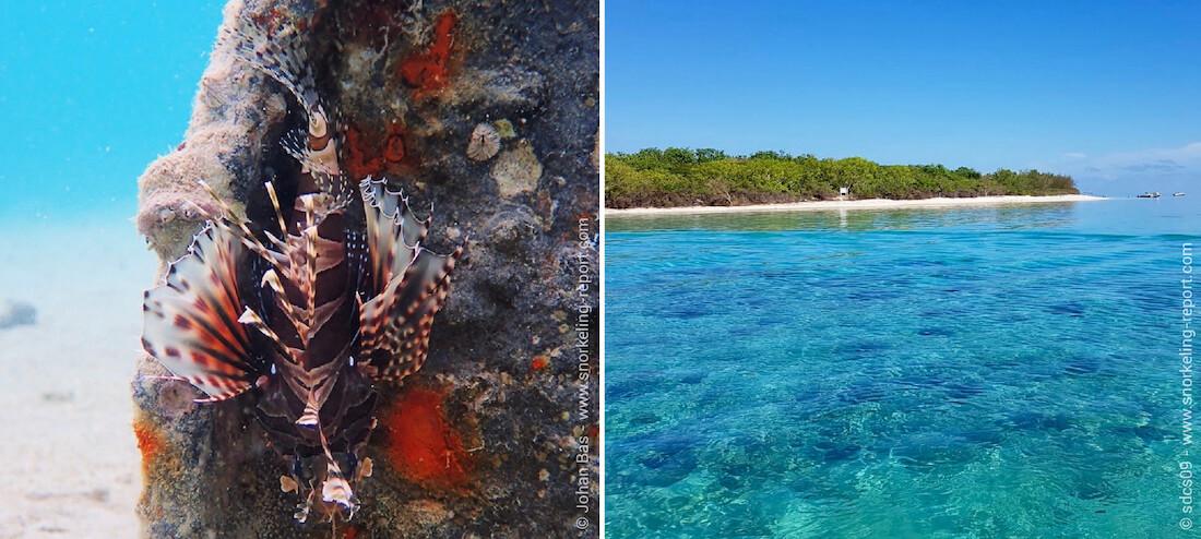 Scorpionfish New Caledonia