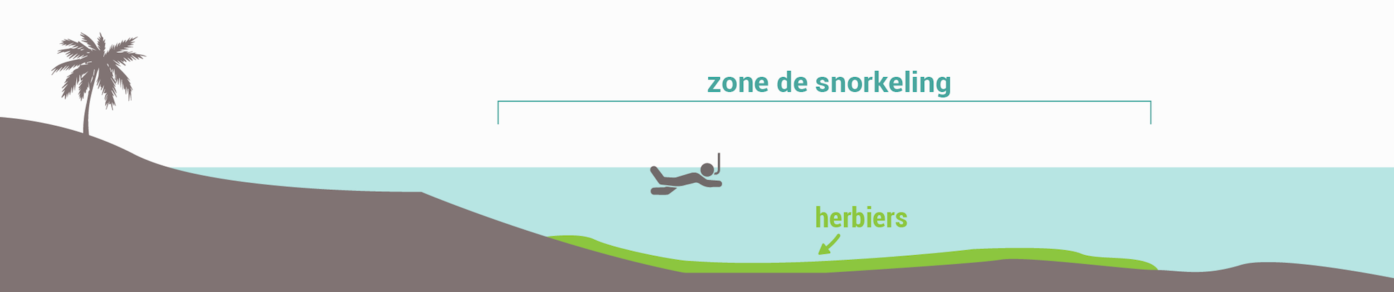 Les types de spots de snorkeling - Herbiers
