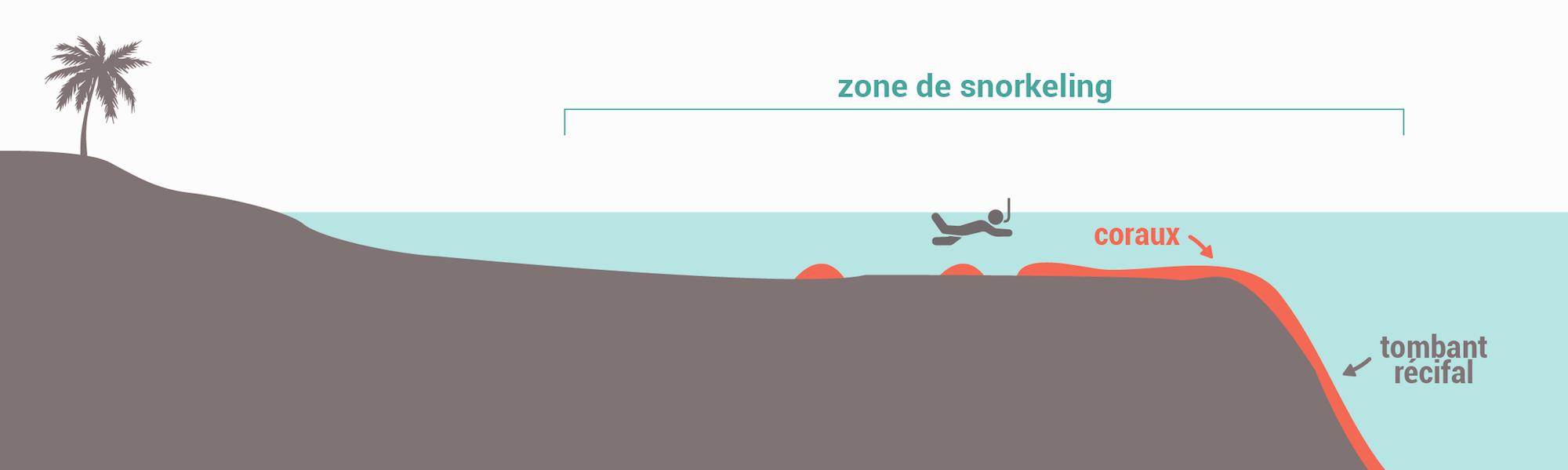 Les types de spots de snorkeling - Tombant récifal