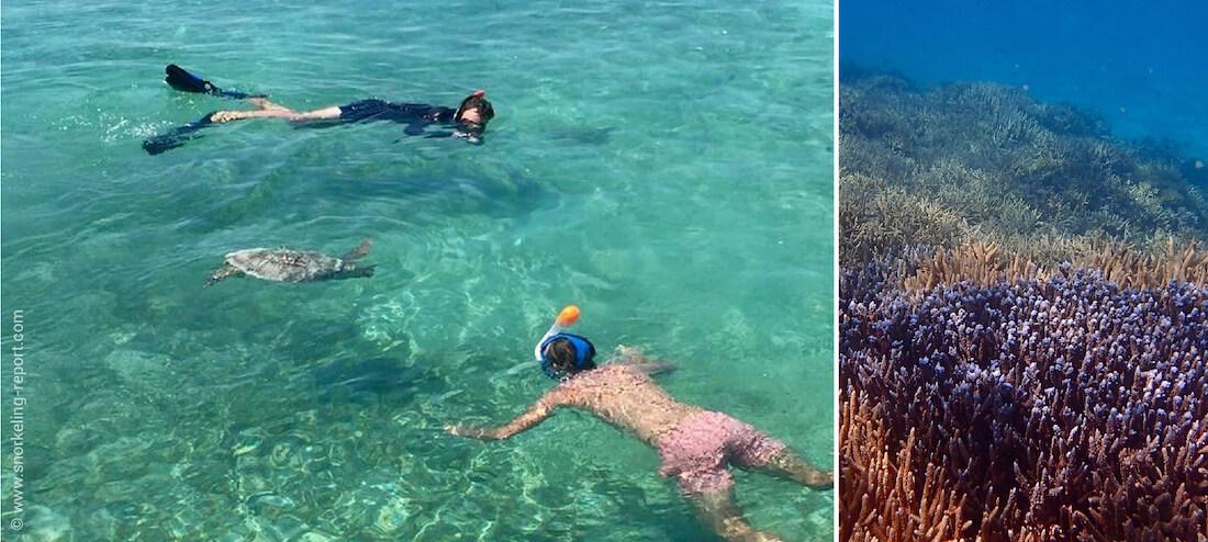 Snorkeling Phare Amédée