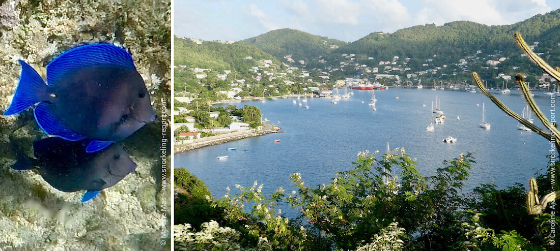 Snorkeling in Saint Vincent and the Grenadines