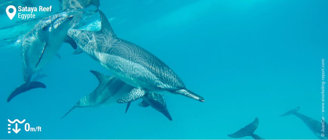 Palmes-masque-tuba avec des dauphins à Sataya Reef (Dolphin House)