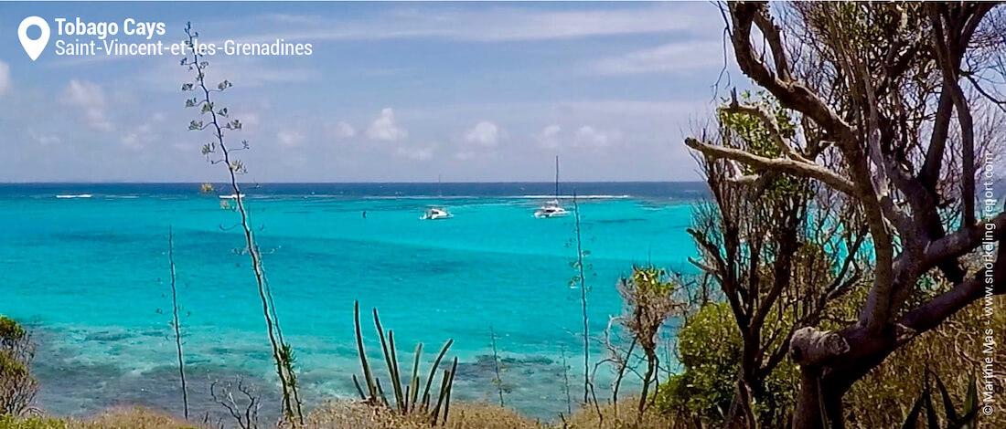 Vue sur les Tobago Cays depuis Baradal