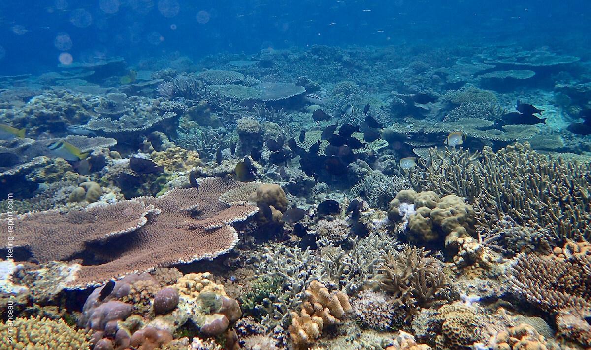 Coral reef at El Nido