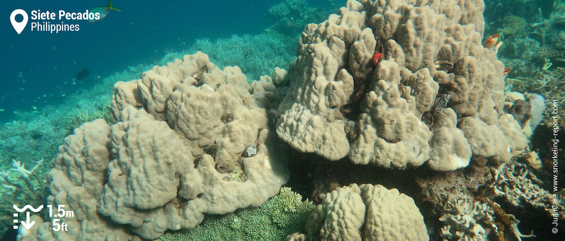 Coral reef at Siete Pecados