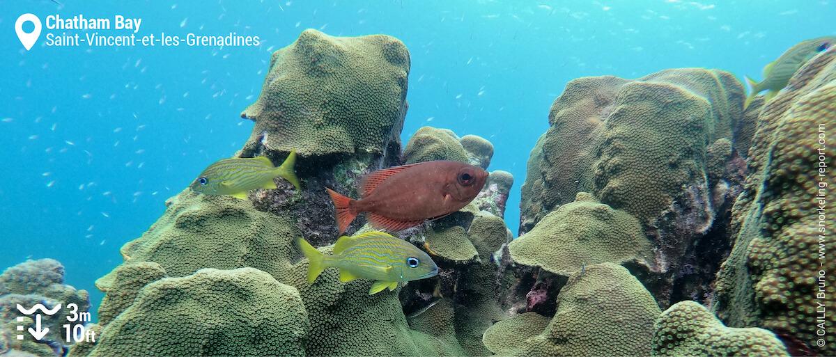 Récif corallien à Chatham Bay