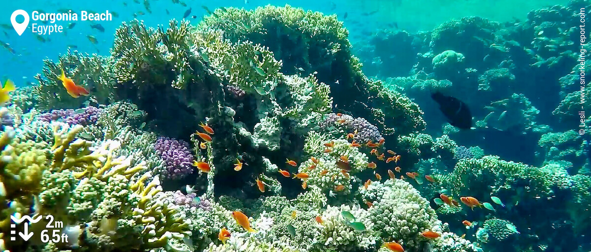 Le récif sud du Gorgonia Beach Resort