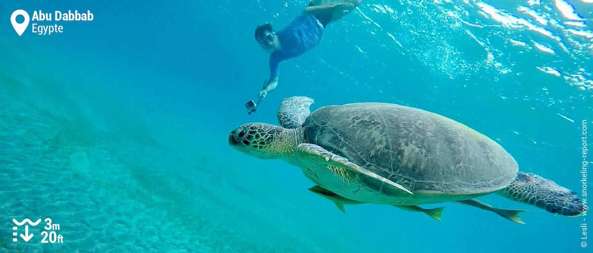 Un snorkeleur nage avec un tortue verte à Abu Dabbab