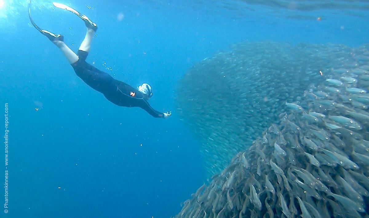 Snorkeling Moalboal
