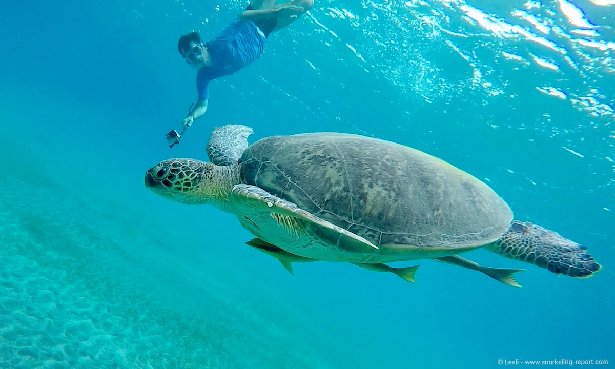 Snorkeling with turtles in Abu Dabbab