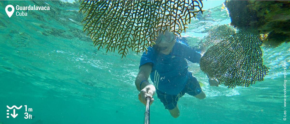 Snorkeler amongst sea fan in Guardalavaca, Cuba