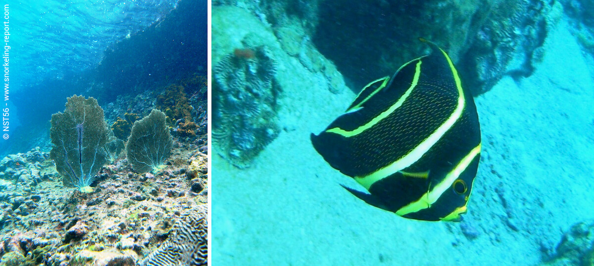 Snorkeling Anse Chastanet