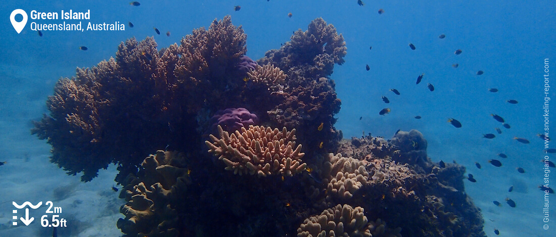 Coral bommies in Green Island