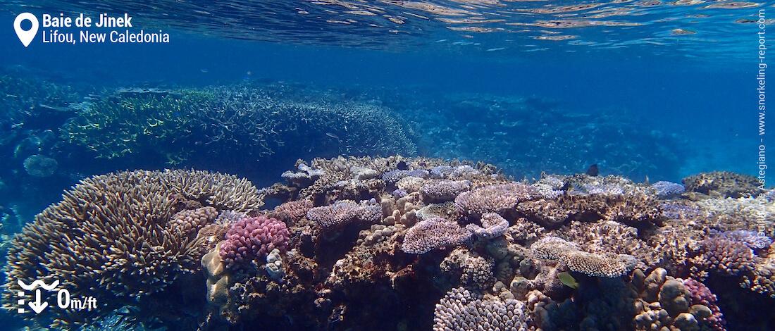 Coral reef at Jinek Bay