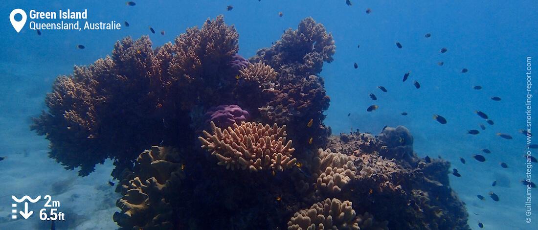 Massif corallien à Green Island