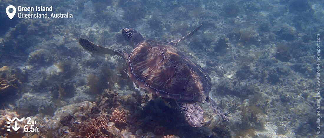 Snorkeling with sea turtles in Green Island
