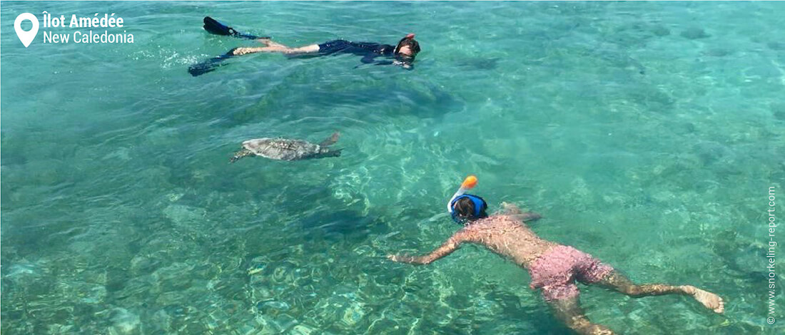 Snorkelers and sea turtle at Amedee Islet, New Caledonia