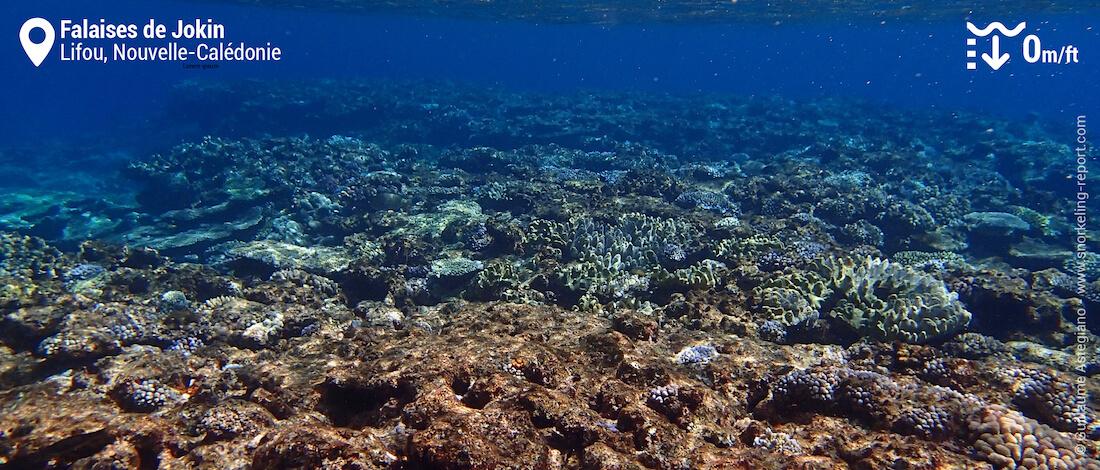 Récif corallien aux Falaises de Lifou