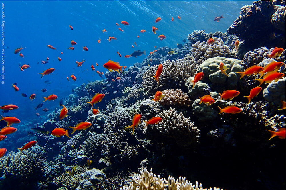 Coral reef underwater photography