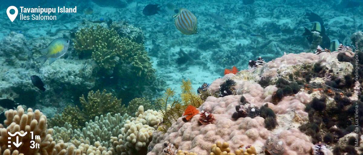 Le récif corallien de Tavanipupu