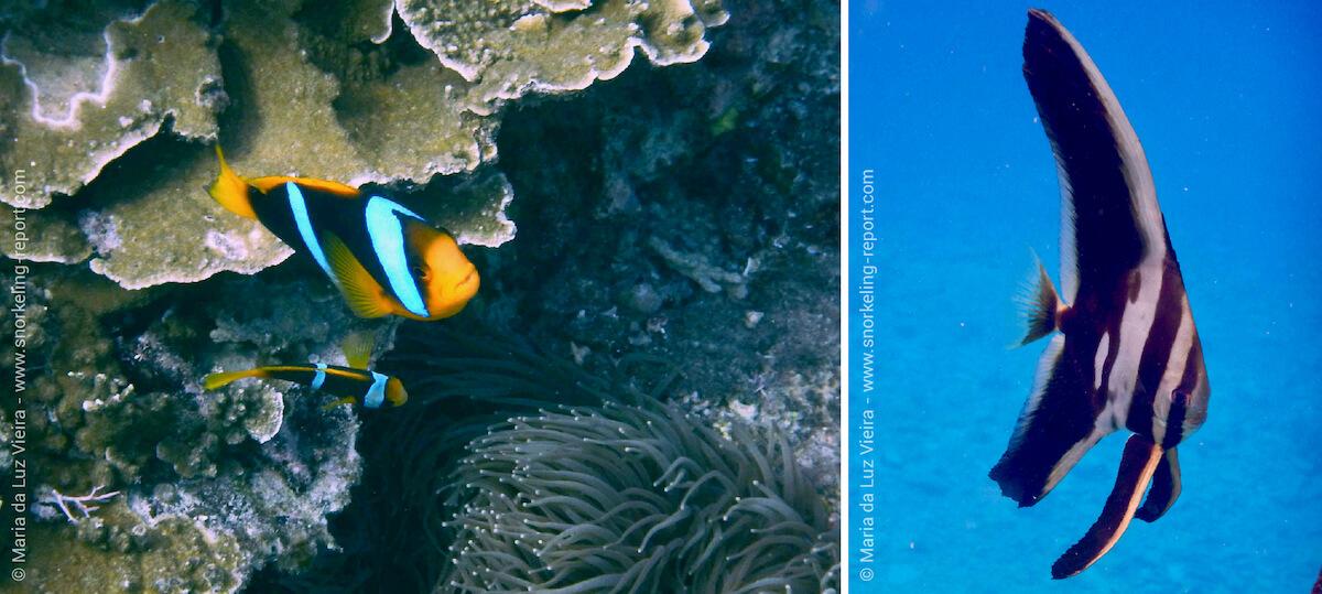 Découverte de la vie récifale des îles Yasawa en snorkeling