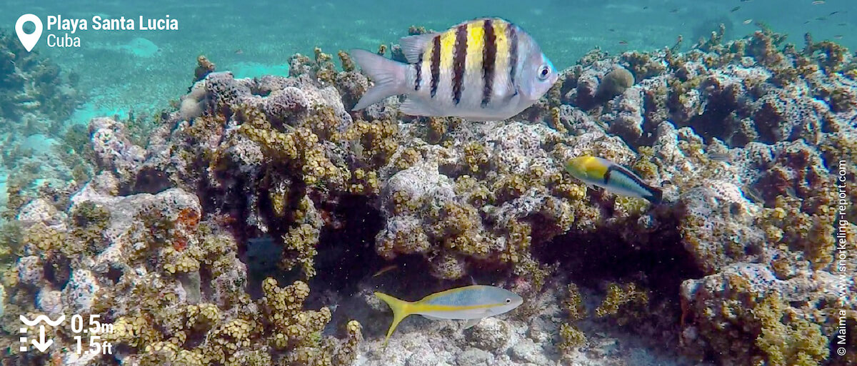 Reef fish at Playa Santa Lucia