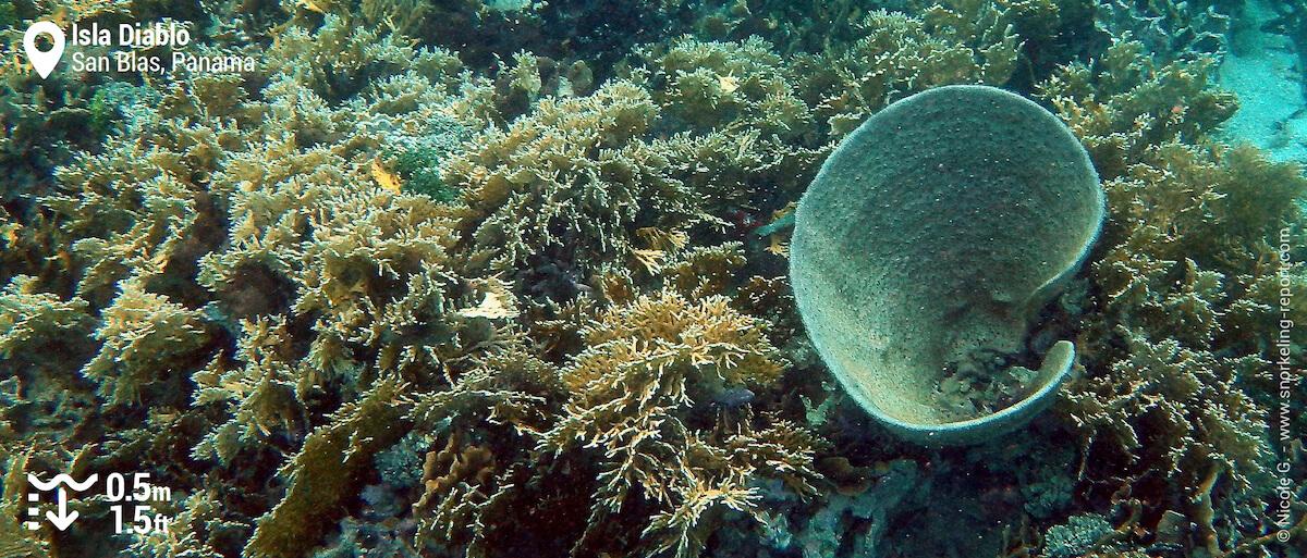 Coral reef at Isla Diablo, San Blas