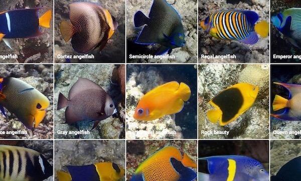 Marine life ID guide