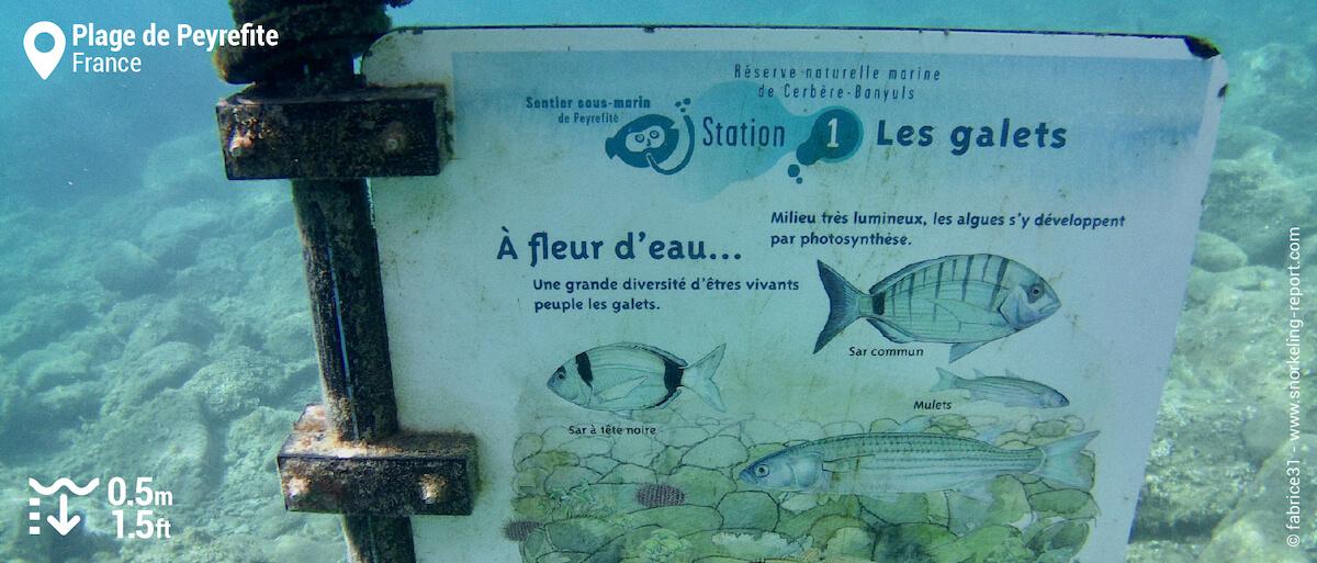 Bouée et panneau du sentier sous-marin de Banyuls Cerbère