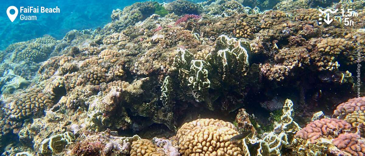 Coral reef at FaiFai Beach