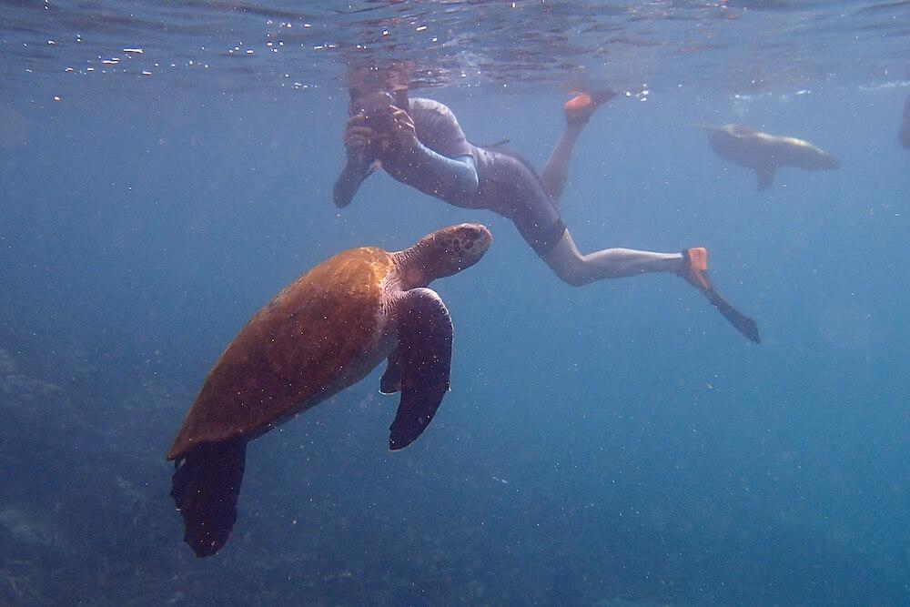 Wetsuit snorkeling Galapagos