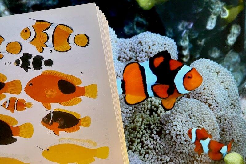 Fish ID books