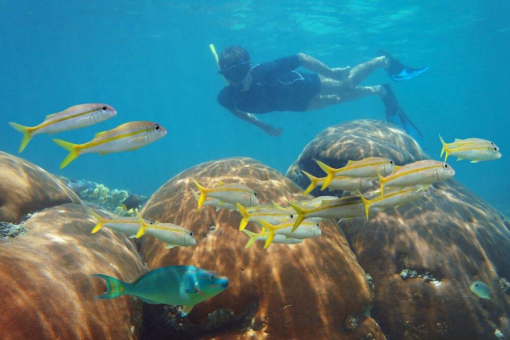 Rashguard snorkeling