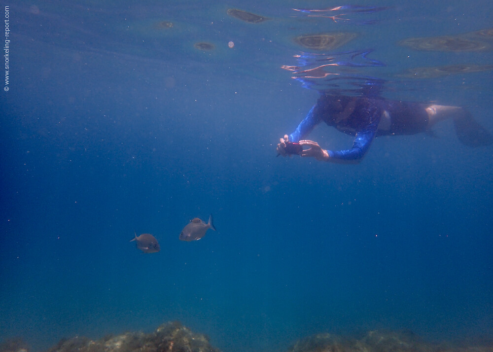 Snorkeler taking picture of a fish