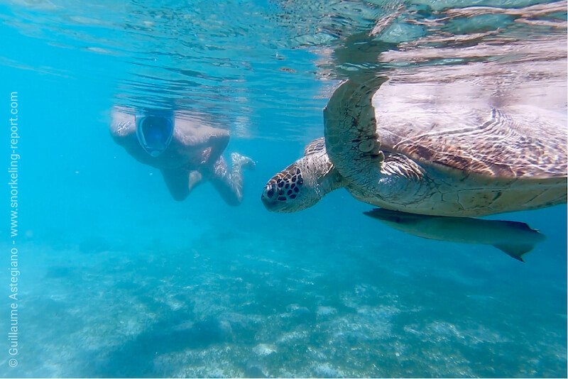 Snorkeler and sea turtle