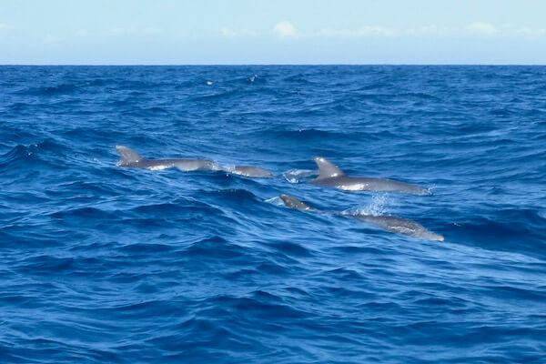 Dolphins Zanzibar