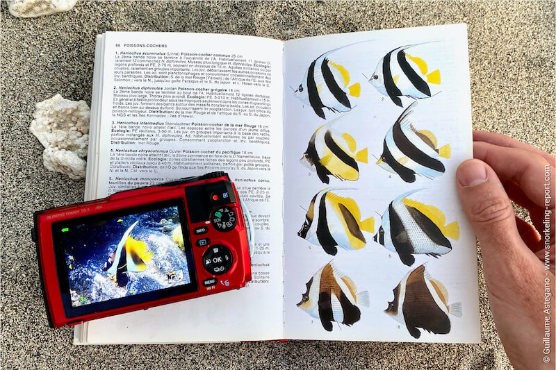 Fish ID book on the beach