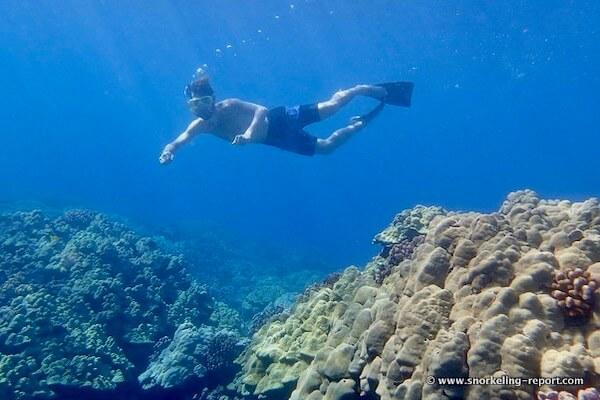 Fringing reef Hawaii