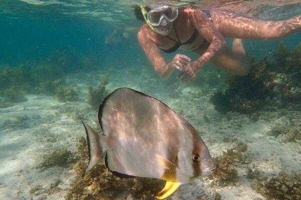 Snorkeling en lagon aux Seychelles
