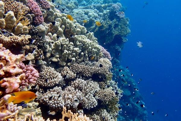 Reef drop off Indonesia
