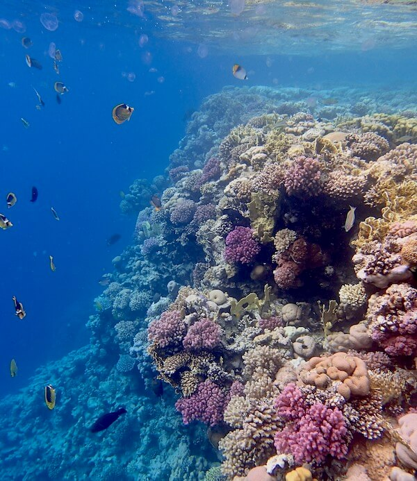 Reef drop off Red Sea