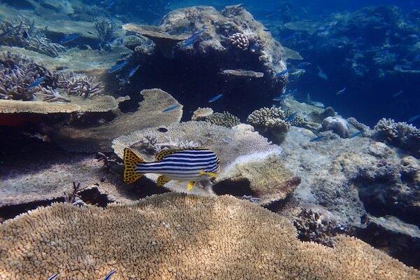 Atoll reef Maldives