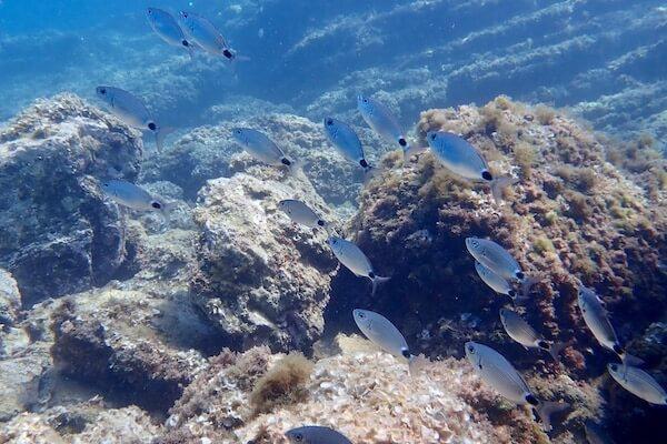 Rocky seabed Mediterranean
