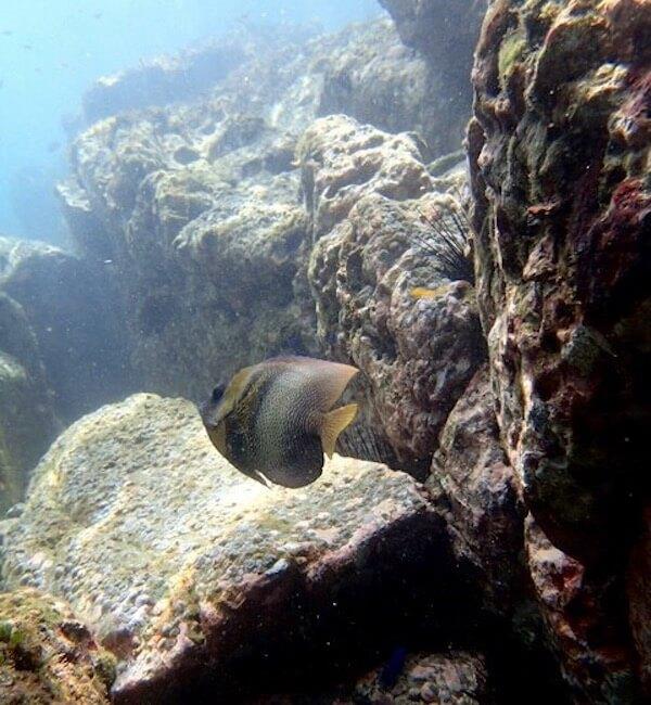 Rocky seabed Costa Rica