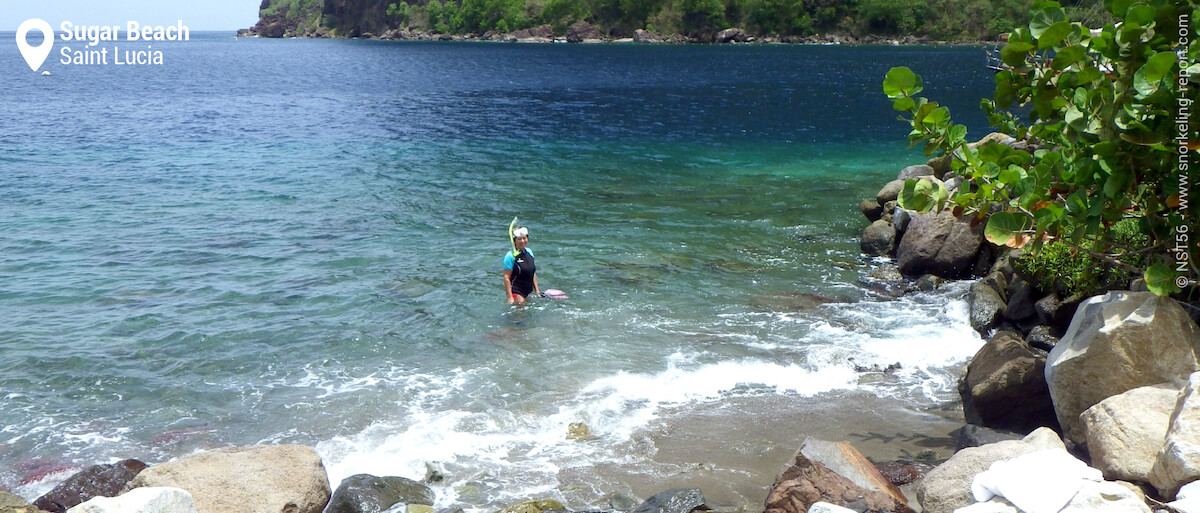 Snorkeling from the beach in Piton Bay