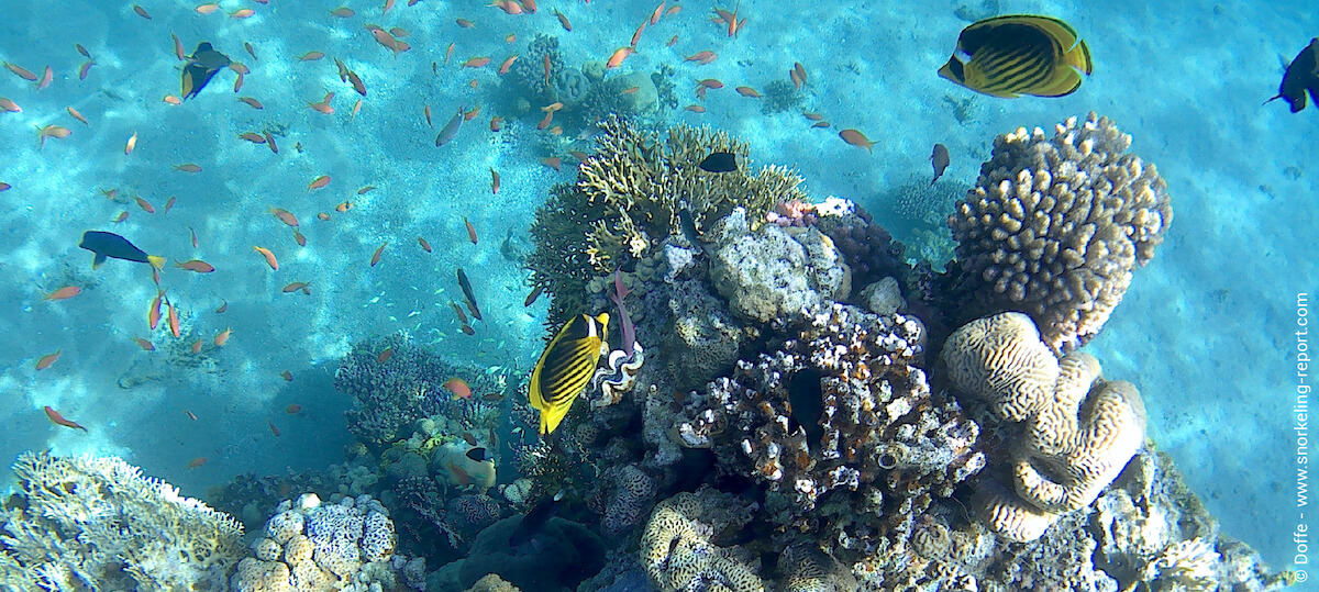 Coral patch and reef fish in Princess Beach
