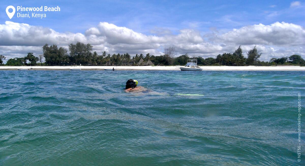 A snorkeler off Pinewood Beach Resort, Diani