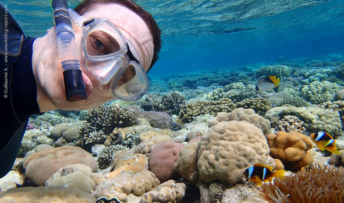 A snorkeler observing a clownfish in the Red Sea