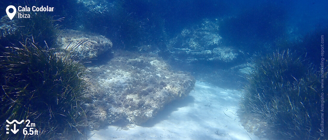 Underwaterscape at Cala Codolar
